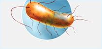 BacT/ALERT<sup>&reg;</sup>: Rare Organism Club...