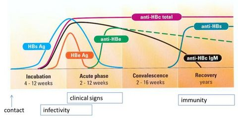 Vidas Hepatitis Panel Hepatitis Diagnosis And Testing A
