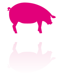 ADIAVET™ Swine